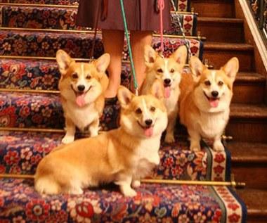 Przyznano psie Oscary