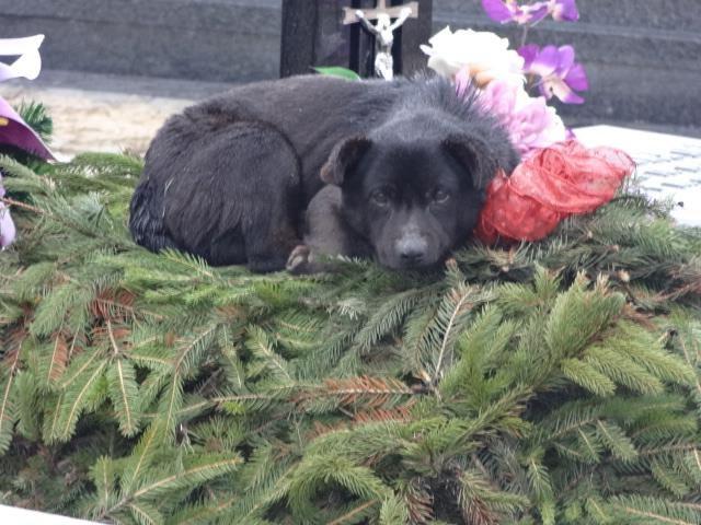 Psa kilkakrotnie przeganiano z cmentarza. Zawsze wracał /Schronisko dla Zwierząt w Zawierciu /INTERIA.PL
