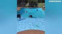 Psia impreza urodzinowa. Zwierzęta pływały i skakały do basenu