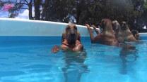 Psia impreza w basenie. Takim to dobrze!