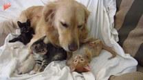 Psiak opiekuje się swoimi przyjaciółmi. Rozczulające