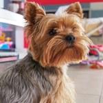 """Psie i kocie """"słitfocie"""" rządzą w sieci - nowa moda?"""