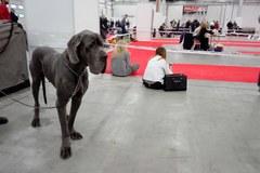 Psie piękności zagościły w Kielcach