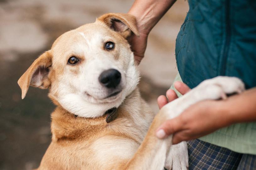 Psy, choć są najlepszymi przyjaciółmi człowieka, pewnych zachowań nie lubią /123RF/PICSEL