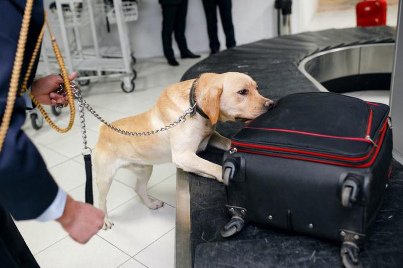 Psy często pracują np. na lotniskach /123RF/PICSEL
