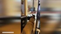 Psy dają znać właścicielce o trzęsieniu ziemi