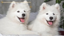 Psy dla alergików. Te rasy mają wyjątkową zaletę