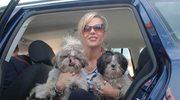 Psy Dody też uczą się jeździć