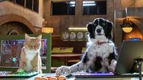 """""""Psy i koty 3: Łapa w łapę"""" [trailer]"""