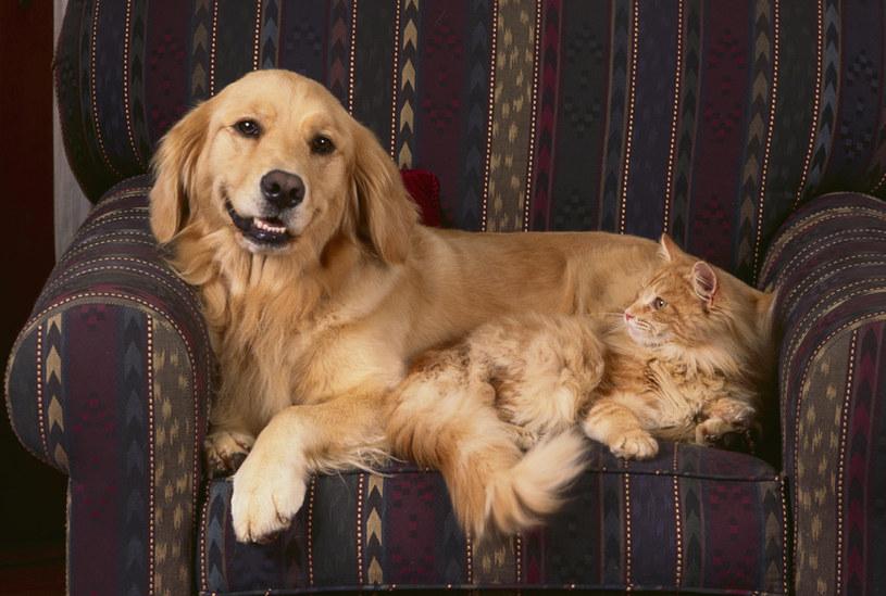 Psy i koty mogą... szkodzić środowisku /© Glowimages