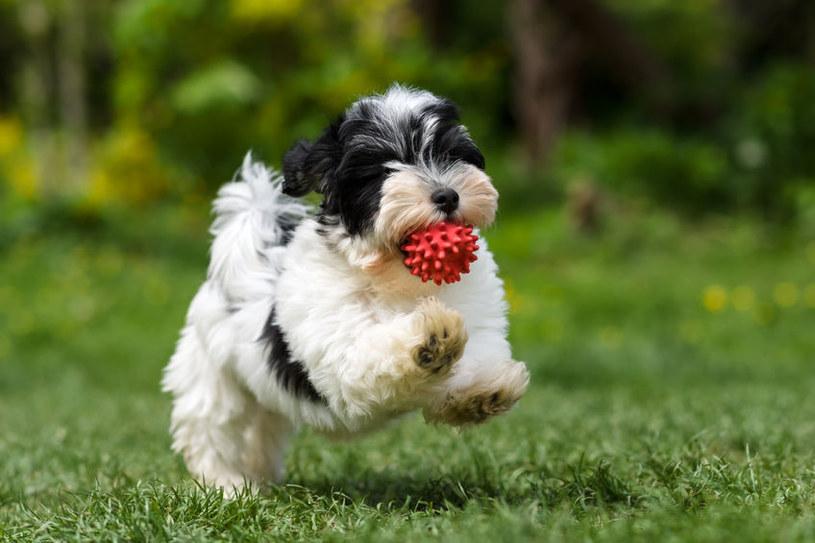 Psy i koty mogą zadławić się np. podczas zabawy na świeżym powietrzu /123RF/PICSEL