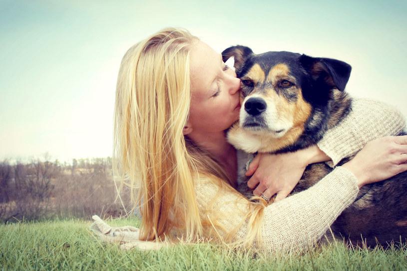 Psy i koty mogą zarazić toksokarozą /123RF/PICSEL