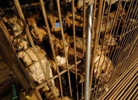 Psy na targowisku w Nanhai, Chiny /East News