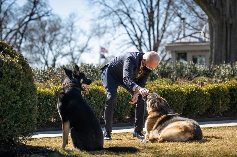 Psy pary prezydenckiej wróciły do Białego Domu /White House /Agencja FORUM