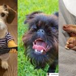Psy podbijają Instagram! Bardziej znani niż niejeden influencer