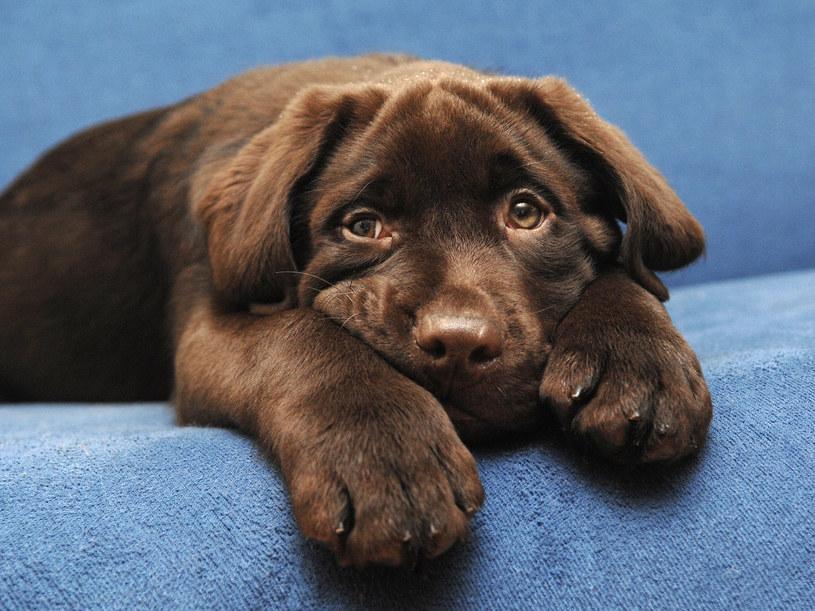 Psy, podobnie jak dzieci, potrzebują czasu na odpoczynek i wyciszenie się /123RF/PICSEL