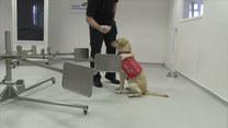 Psy pomogą w tropieniu COVID-19?