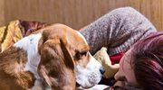 Psy rozpoznają, kto jest zarażony koronawirusem?