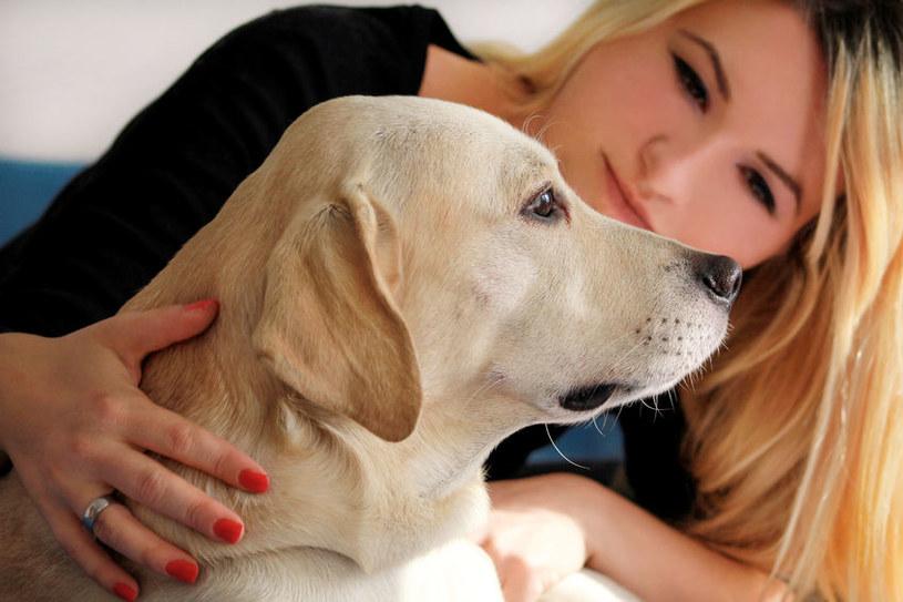 Psy są idealne, jeśli nie możesz zasnąć /123RF/PICSEL