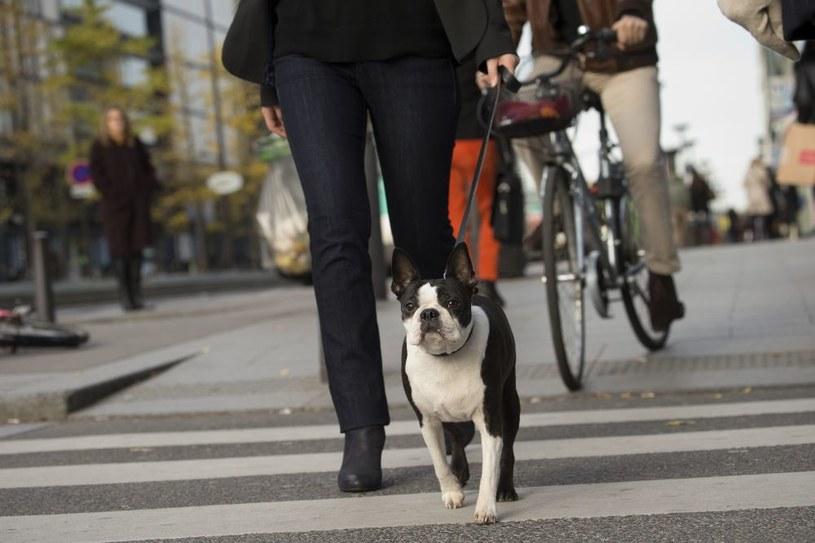 Psy są szczególnie narażone na wdychanie toksycznych związków /materiały prasowe