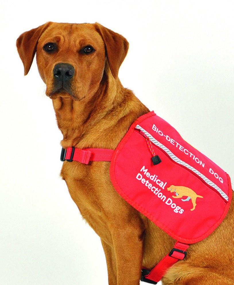 Psy szkolone w fundacji Claire Guest mogą pochwalić się wysoką skutecznością diagnozy /materiały prasowe