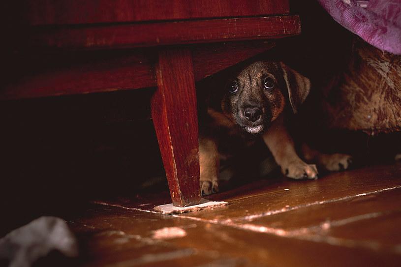 Psy szukają schronienia, gdzie nie będą widzieć i słyszeć symptomów burzy