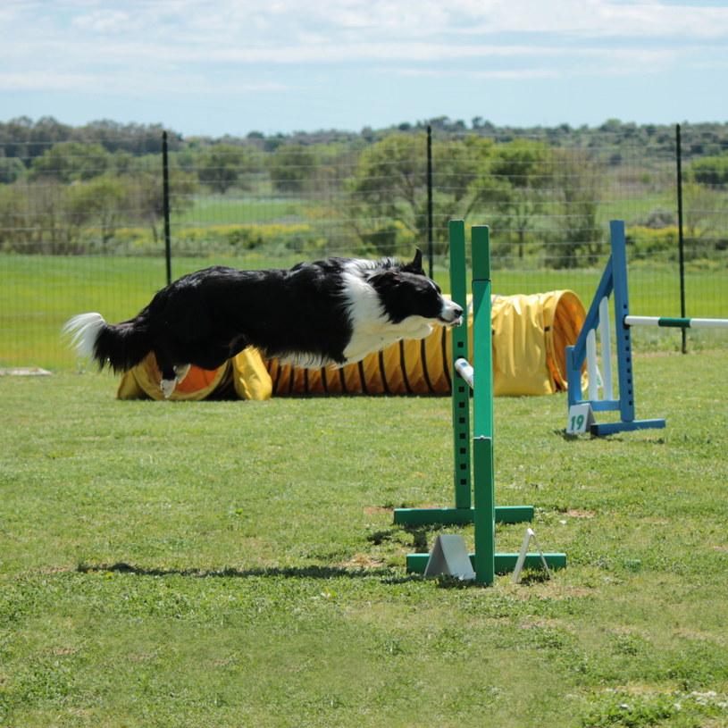 Psy uprawiające sport mają większe zapotrzebowanie energetyczne /123RF/PICSEL