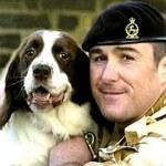 Psy wojny i gołąbek (nie)pokoju