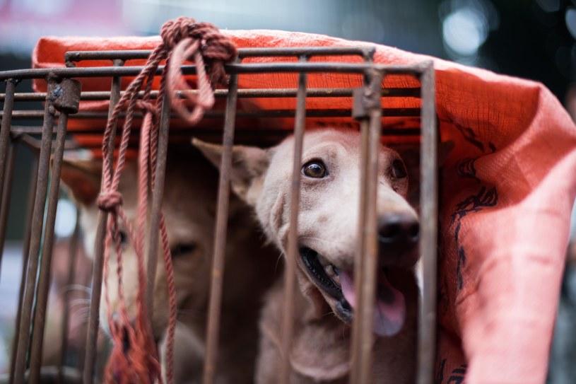 Psy zamknięte w klatkach na chińskim targowisku /JOHANNES EISELE/eis//ACW /AFP