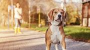 Psy, zanim zaczną krzyczeć, mówią do nas szeptem