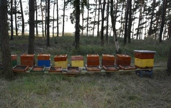Pszczelarz miał otruć 420 tys. pszczół; policja szuka jego wspólnika /KPP Gostyń /Policja