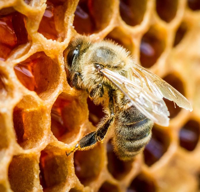 pszczoły i propolis /© Photogenica