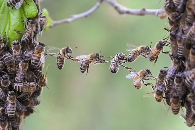 Pszczoły na Podkarpaciu mają się świetnie /©123RF/PICSEL