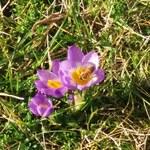 Pszczoły rozpoczęły wiosenną aktywność. Można je zaobserwować w centralnej Polsce