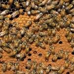 Pszczoły też potrzebują kościołów