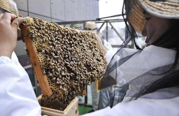 Pszczoły uciekają z uli /AFP