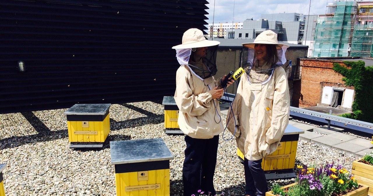 Pszczoły w centrum Łodzi