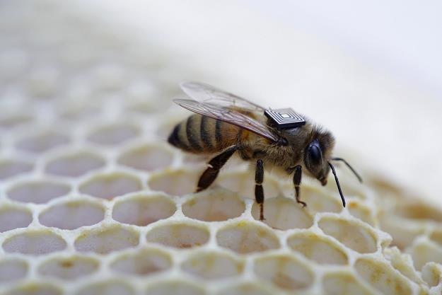 Pszczoły w dobrej kondycji przetrwały zimę  ! /AFP