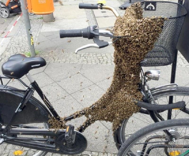Pszczoły wcale nie chciały zostawić roweru /Der Tagesspiegel /Twitter