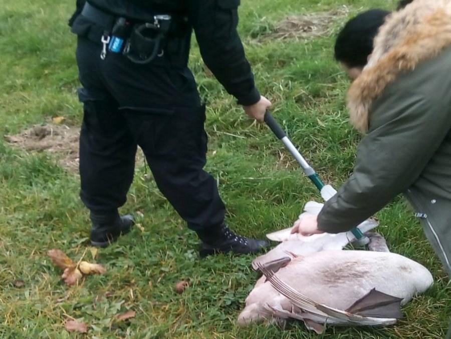 Ptak został opatrzony i trafił do lecznicy /KPP Stalowa Wola /