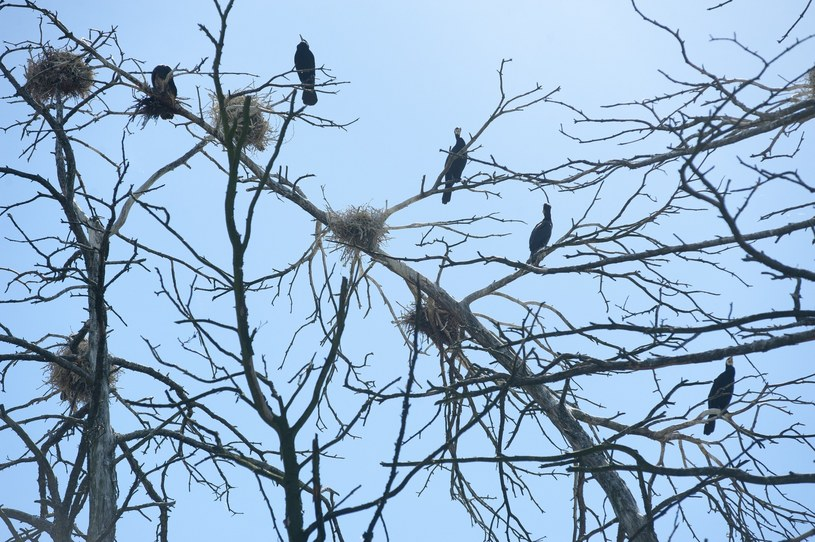 Ptaki w Kątach Rybackich/fot. W. Strożyk /Reporter