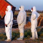 Ptasia grypa nadal groźna, wykryto kolejne 23 ogniska choroby