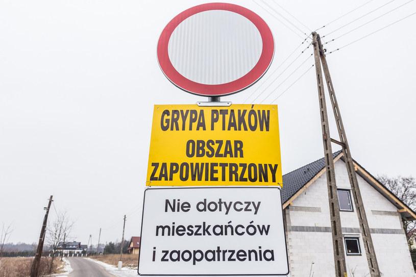 Ptasia grypa, zdjęcie ilustracyjne /Krzysztof Kaniewski/REPORTER /