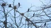 Ptasie miejscowości na Mierzei Wiślanej