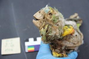 Ptasie mumie. Tajemnica pustyni Atakama rozwikłana