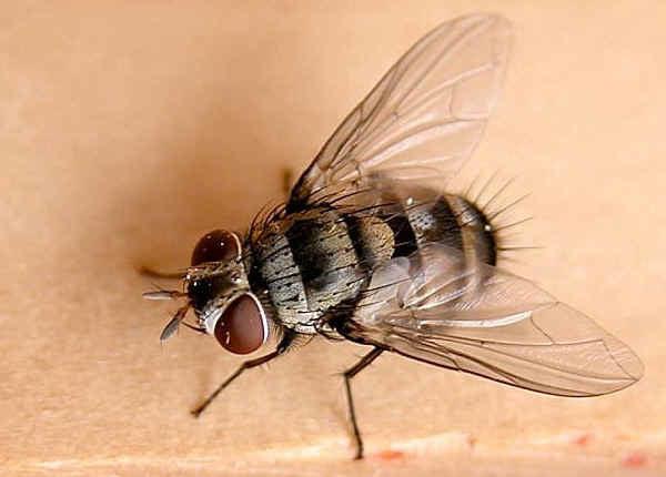 pułapka na muchy /© Photogenica