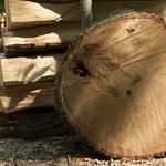 """""""Puls Biznesu"""": Lasy Państwowe - drewno płynie za morze"""
