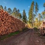 """Puls Biznesu"": Trudne zmagania o drewno"