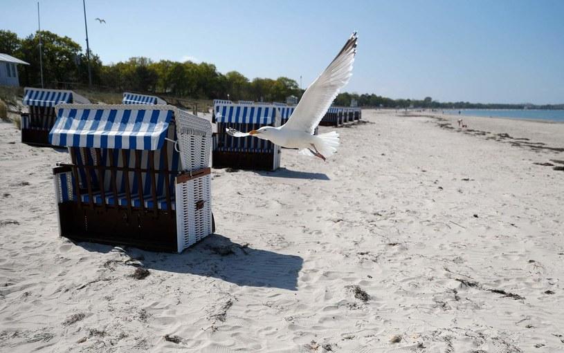 Pusta plaża w Meklemburgii-Pomorzu Przednim /ODD ANDERSEN /AFP