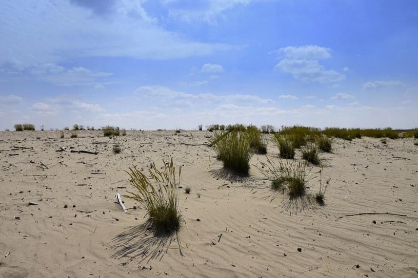 """Pustynia Błędowska kiedyś tak przypominała pustynie w Afryce, że Jerzy Kawalerowicz kręcił tutaj """"Faraona"""". /East News"""